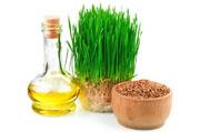 Масло ростков пшеницы